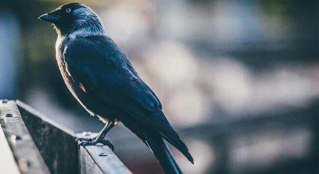Vogelpoep Verwijderen Van Hout