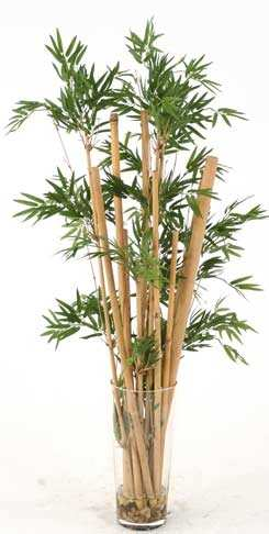 Bamboeplant Als Decoratie