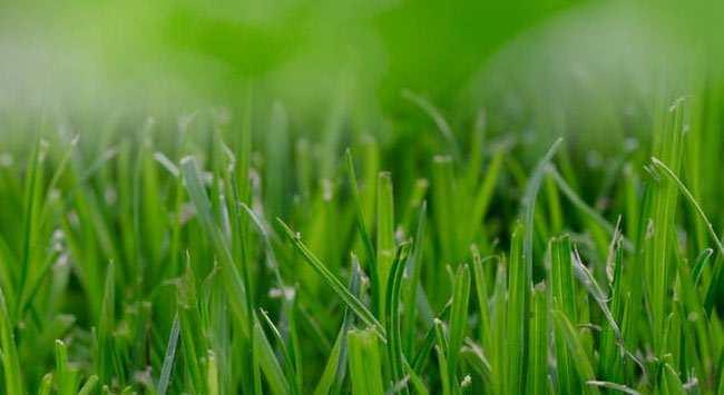 Gras Maaien: Stap-Voor-Stap Een Mooi Gazon