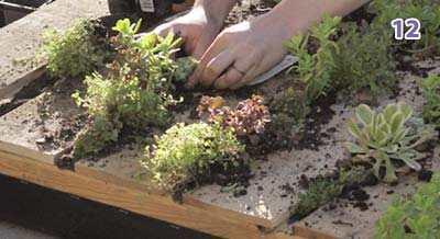 Plantjes Planten In De Pallet Tuin