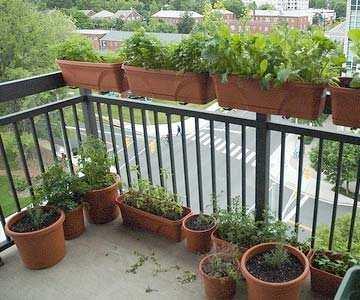 Plantenbakken Op Het Balkon Om Groenten En Kruiden In Te Kweken