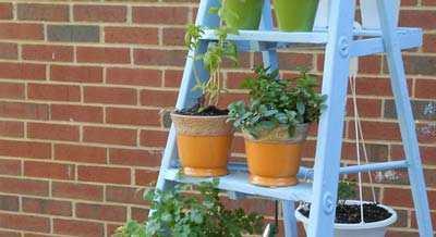 Ladder Als Verticale Tuin