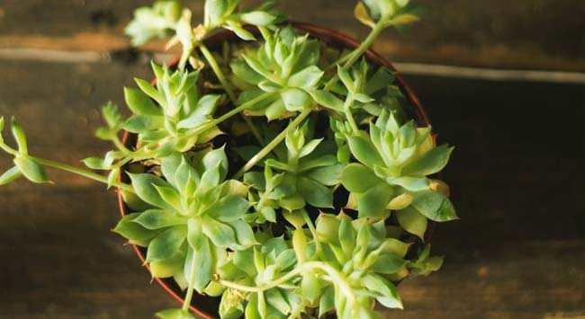 Verticale Tuin Maken [Plantenwand Voor Binnen En Buiten]
