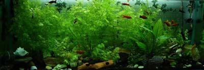 Verhuis het aquarium niet met volle inhoud