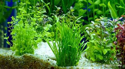Aquariumplantjes meeverhuizen