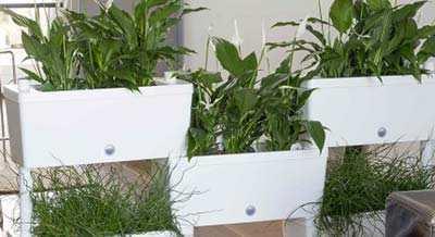 Verticale Tuin Binnen : Verticale tuin maken [plantenwand voor binnen en buiten