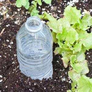 Ongebruikt Potplanten Water Geven Als Je Op Vakantie Bent | gelukkigerwonen ZM-07