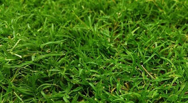 Gras Groener Krijgen