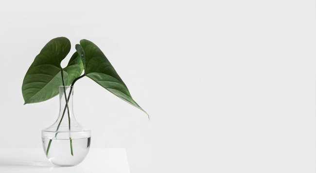 Creatief Met Glazen Vazen: Vullen En Decoreren