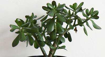 Planten Slaapkamer Baby : Planten in de slaapkamer: luchtzuiverend en een betere nachtrust