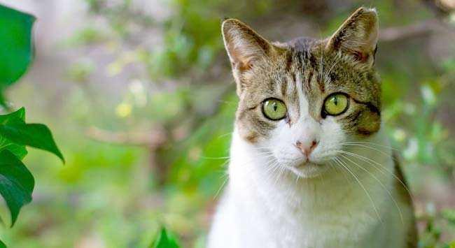 Kattenstront In Tuin : Katten in de tuin iris garden ecology