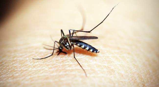Muggen In Slaapkamer Voorkomen En Vangen