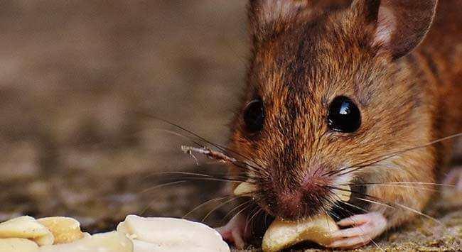 muizen verjagen op natuurlijke en diervriendelijke manieren, Gartenarbeit ideen