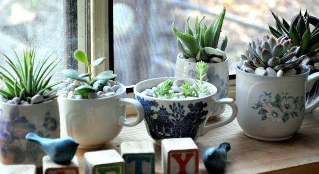 Plantjes In Koffiekopjes