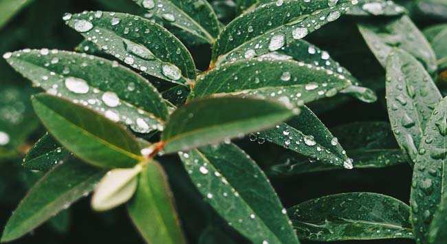 Regenwater Opvangen En Gebruiken