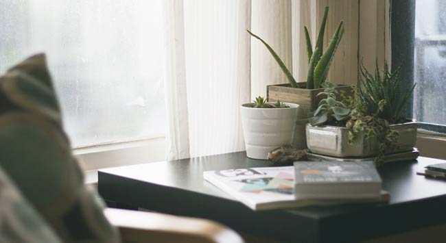 planten voor in de slaapkamer voor een betere luchtkwaliteit