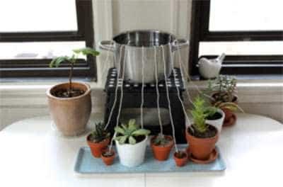 Touw Om Potplant Water Te Geven