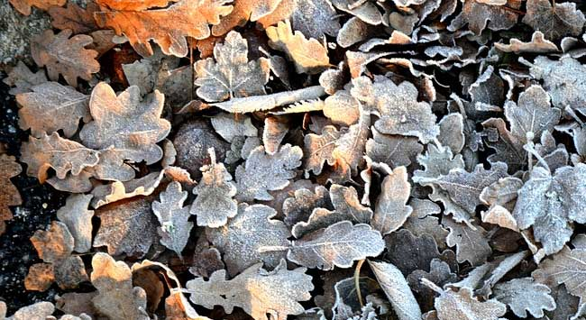 Tuin Klaarmaken Voor De Winter