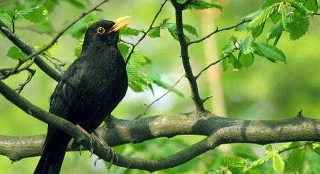 Wil Je Meer Vogels In Je Tuin?: Creëer Een Vogelvriendelijke Omgeving