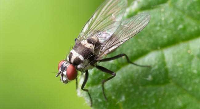 Vliegen Verjagen: Uit Huis En Tuin