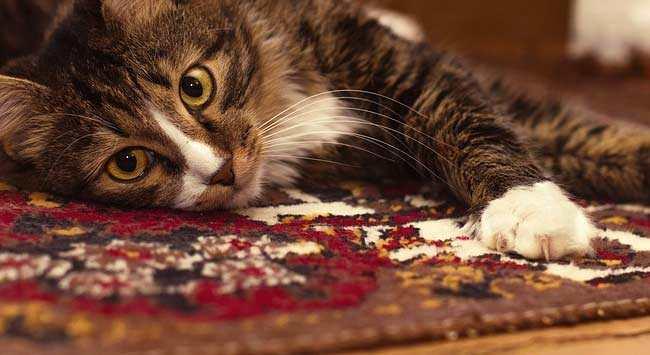 Reinigen Perzisch Tapijt : Vloerkleed schoonmaken laagpolig en hoogpolig karpet reinigen